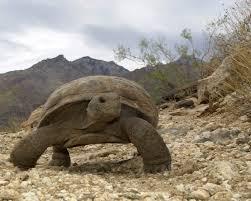 tortouse