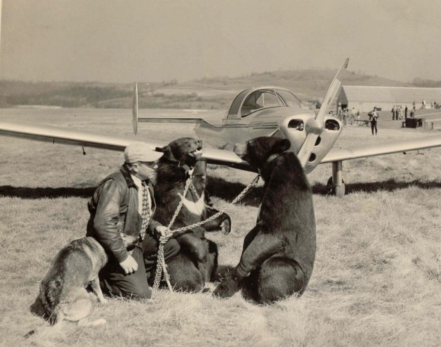 ercoupe_and_bears-jpg__1072x0_q85_upscale